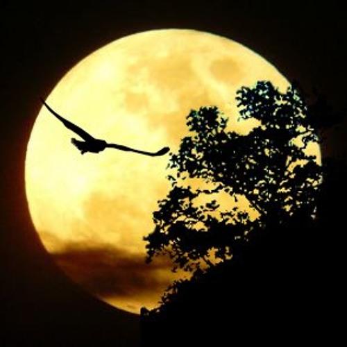 Neo Resolution - Midnight Flight