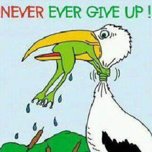 WhatitDizz - STBB 305 Never Give up