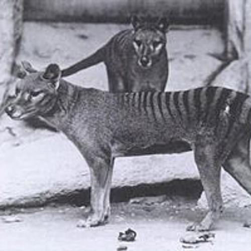 Thylacine Dream