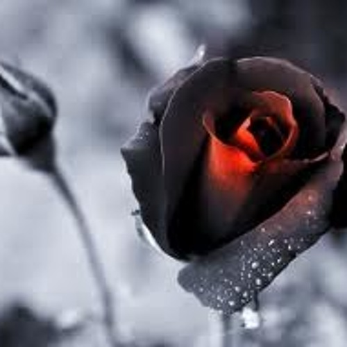 Dying Rose in Autum