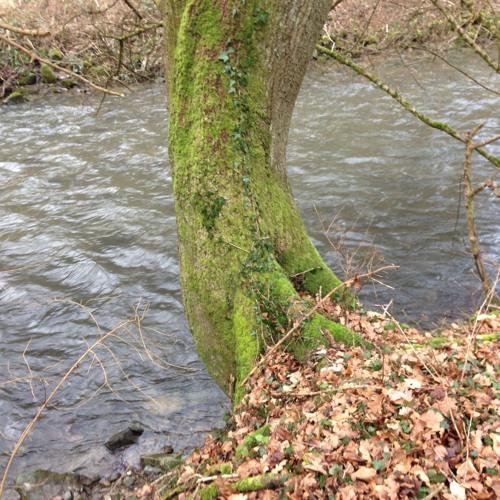 Elzbach Creek in Moselkern, Germany