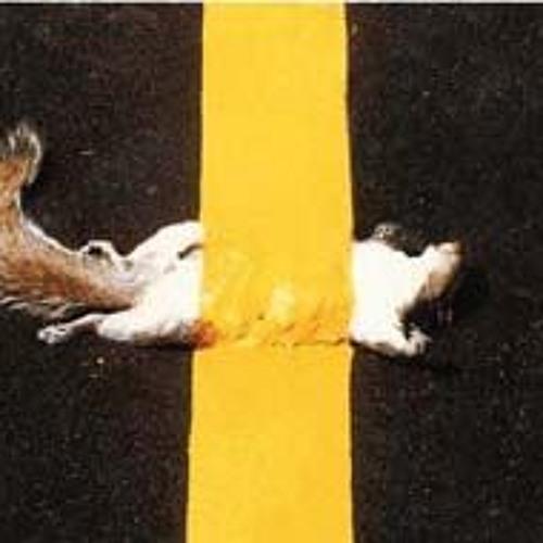 iSeeChange Questions: Road Kill Squirrels