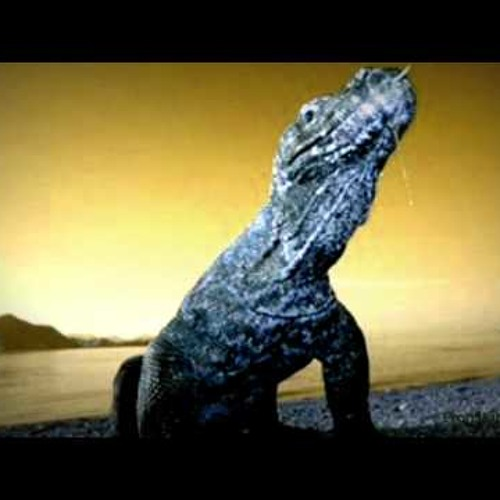 Mauro Picotto - Lizard (Tiny Tim Remix)