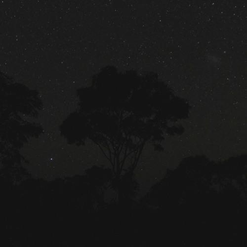 Stargazing Savanna (generative landscape #1)