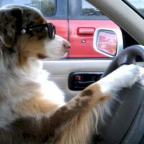 Holy shit! My dog is driving my car!