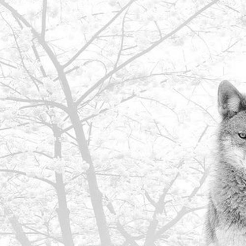 FlicFlac - Wintermärchen