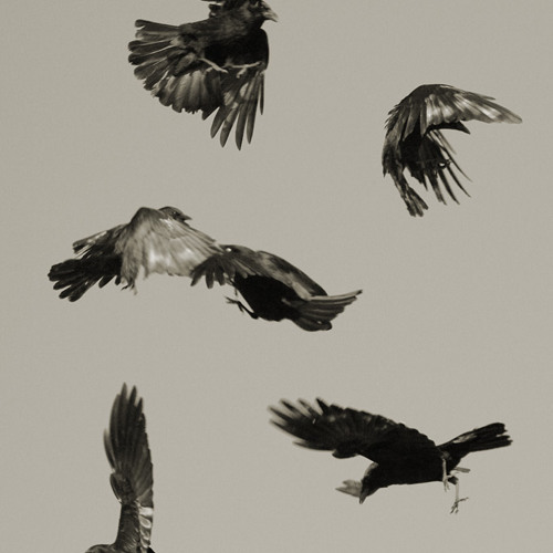 Don't Fly Today, Crow