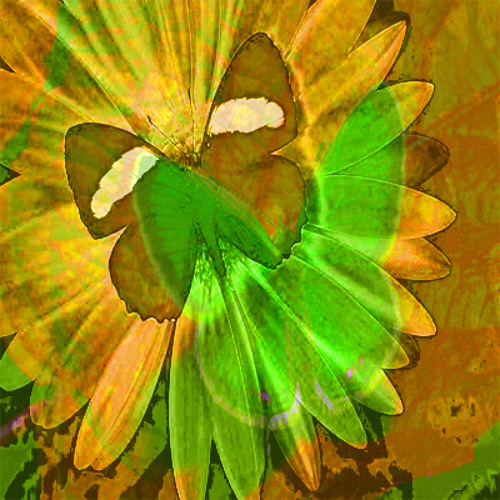 Lovégo Libertas - Butterflies