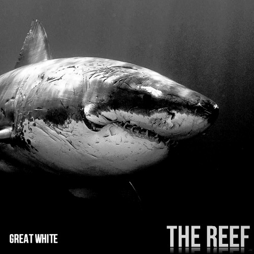 The Reef - Great White (Original Mix) - FREE DOWNLOAD - 1yr anniversary