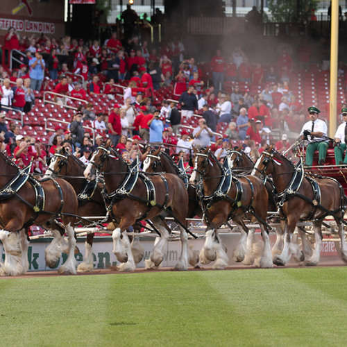 Jim Poole, Budweiser Clydesdales General Manager