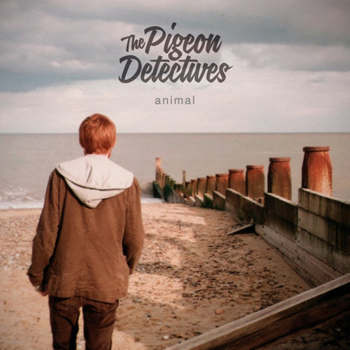 The Pigeon Detectives - Animal