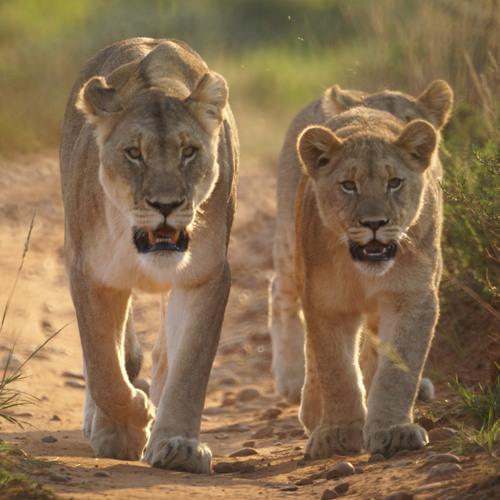 A2 Wildlife Documentary