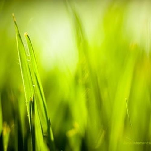 Grain Drop-Dancing Grass