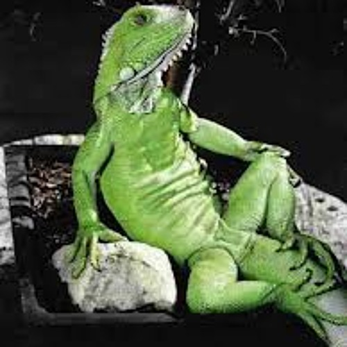 Reptilian Sextape #666
