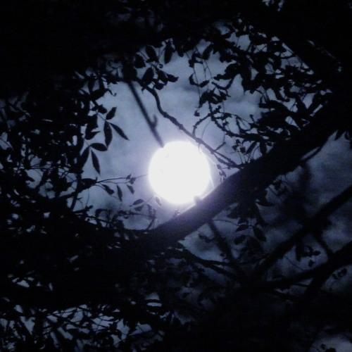 Canyon Moonrise.