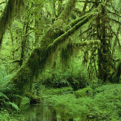 Dark/Forest Psytrance