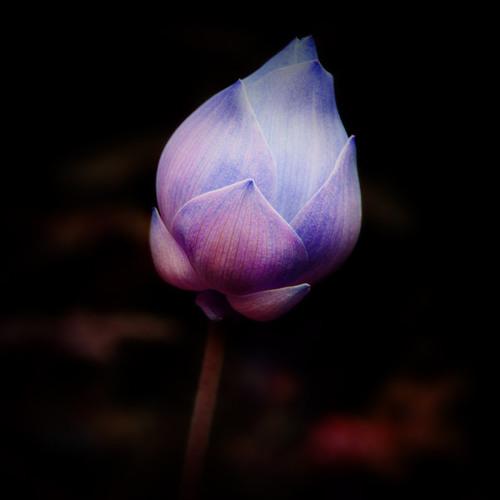 Aquafeel - Rising Lotus Part 02 (DjMix)