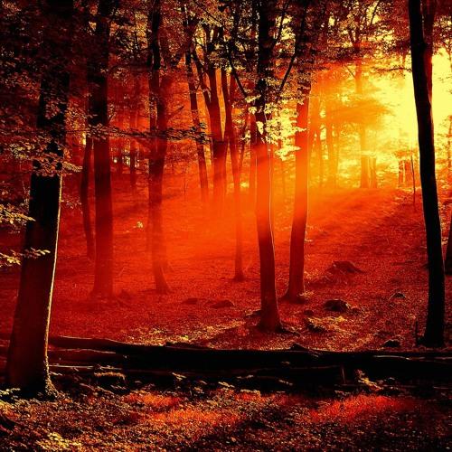 Nordic Dark Progressive Forest