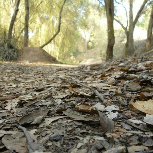 cobb trail