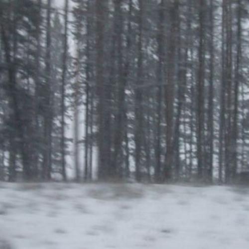 Winter - Jaap & Jasper