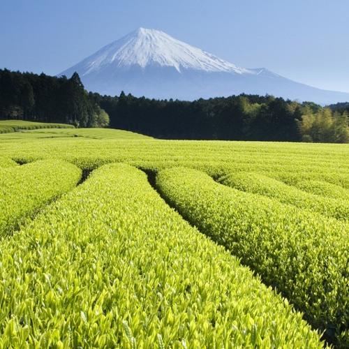 Kastla - Tea Green