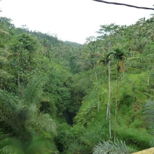 Bali Ubud ambiences.Tragalalan village road.crickets.