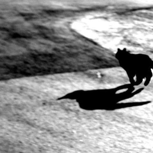 Himalayan wolf (test)
