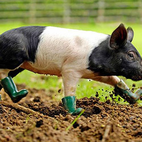Walking pig mix