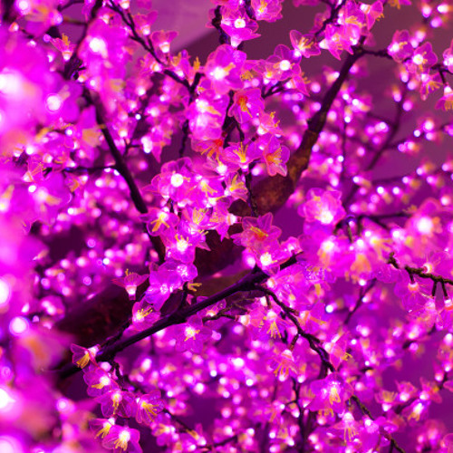 Electric Cherry Blossom