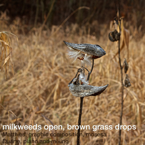 Milkweeds open, brown grass drops (Matthies, graphic composition, Duarte, piano, mixing)