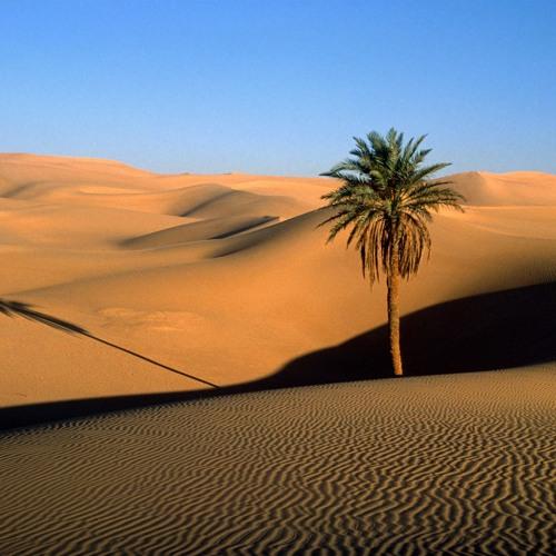 Sahara Sugar
