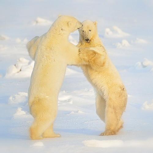 빙판의 왈츠(waltz on the ice) - 황윤제