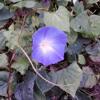 Wildwood Flower (June Carter Cash Cover)