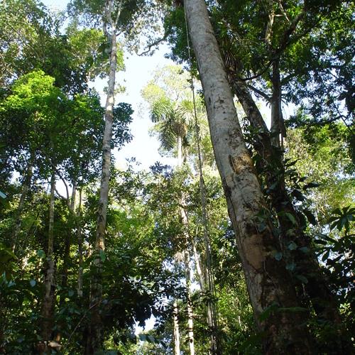 Fieldrecording: Treefrogs in the Peruvian Amazone