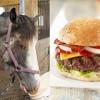 C9 - Horse Burgers [CLIP]