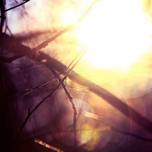 Am.Light - Memoriam