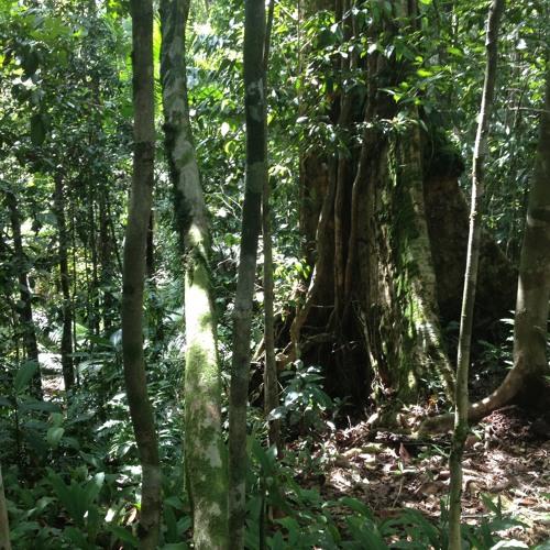 Jungle Nightscape (Mentawai Island, West Sumatra, Indonesia)