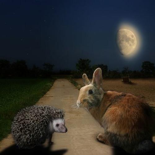 Peter Reinhardt - Wo sich Igel und Hase gute Nacht sagen