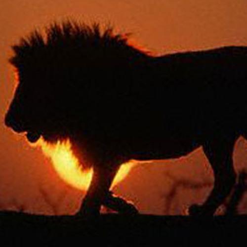 #Kosha- Pride Of A Lion - 2013