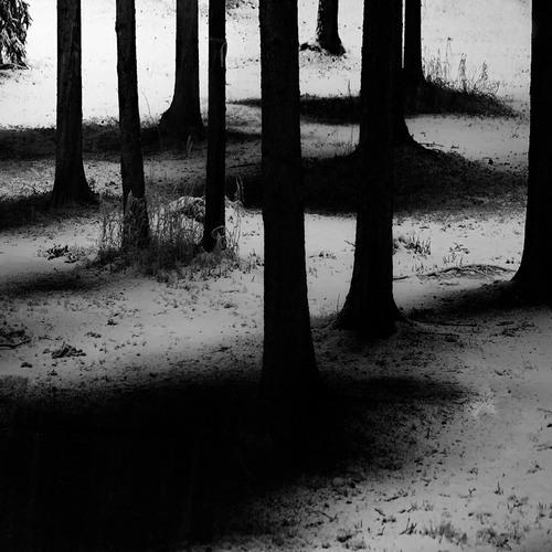 Where The Trees Walk