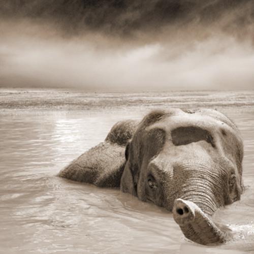 Elephants on the roof Podcast (Jan 13) - LumP's Elephant Fairytales