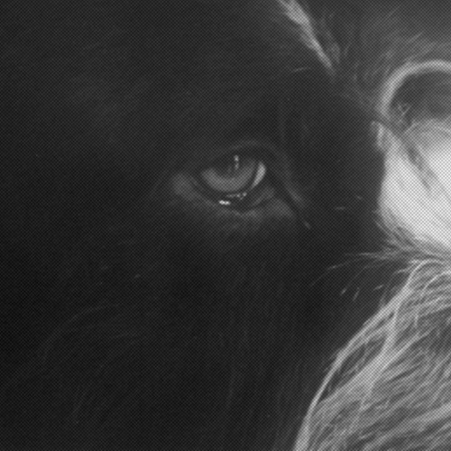 RVN005 | Panthera Krause - »Yorikke«
