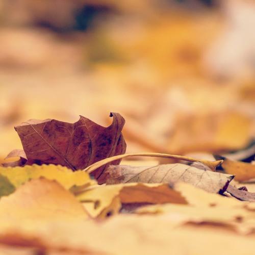 Treading On Dry Leaves In The Fall - Future Feelings | @winesofarg #WineCloudcast