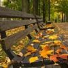 Autumn In My Heart - Reason (Piano Instrumental)