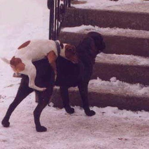 Same Love (Doggy Style)