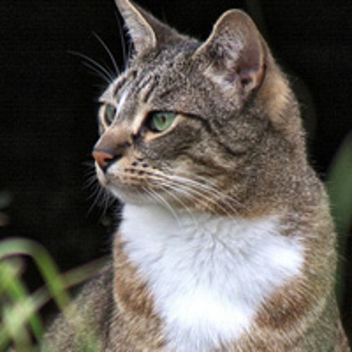 Cats and their impact on wildlife