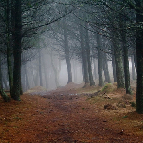 Into the woods (free to download)