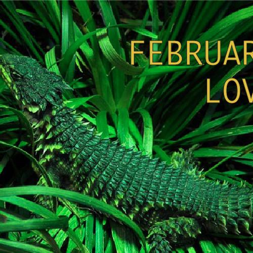 February Love '13