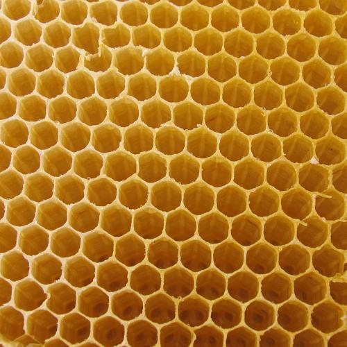 TL& - Hive