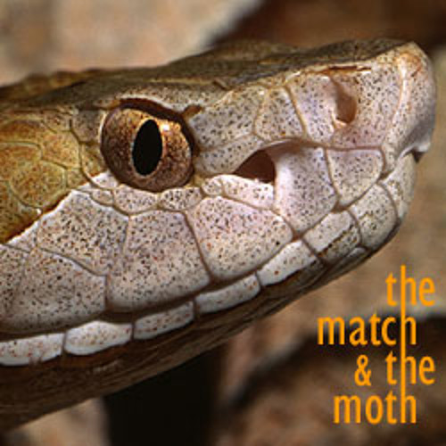 The Match & The Moth - Animal Mind (Live)